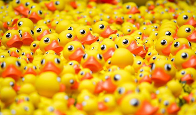 Lots of yellow plastic ducks, toys commonly associated with BPA and other toxic chemicals.