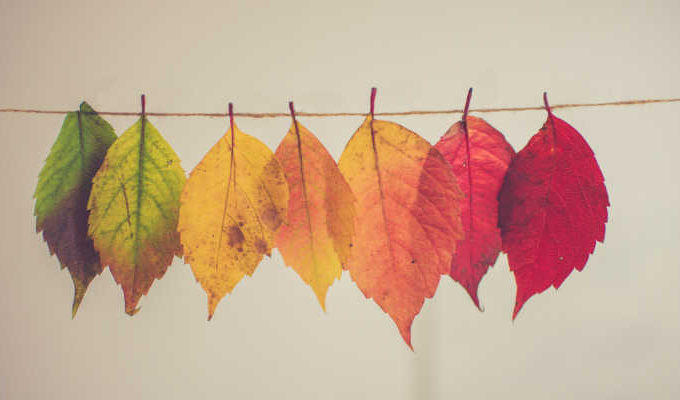 Natural leaves on a washing line to represent non toxic washing detergents. Photo by Chris Lawton on Unsplash.