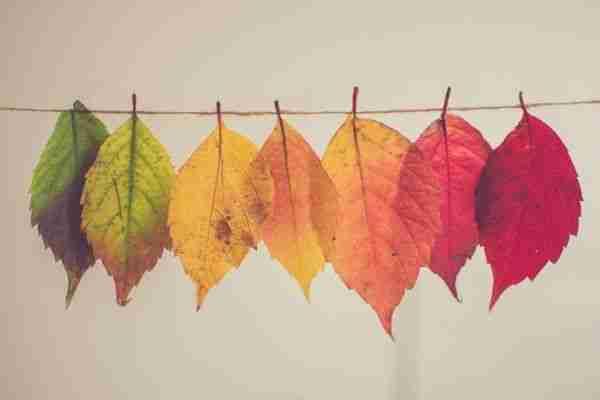 Leaves in a range of colours. Photo copyright Chris Lawton, via unsplash.com.